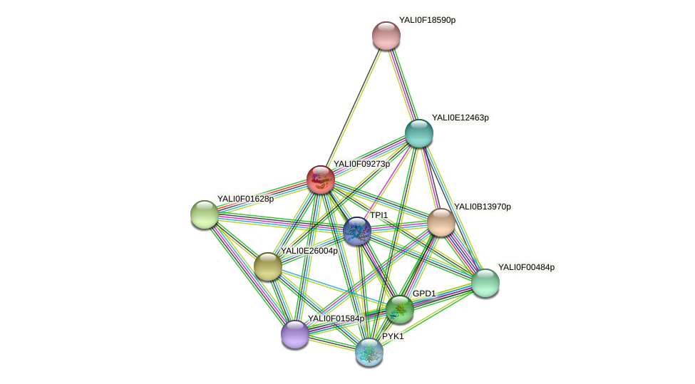 XP_505199.1 protein (Yarrowia lipolytica) - STRING interaction network