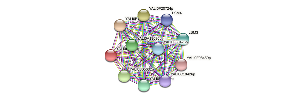 XP_505203.1 protein (Yarrowia lipolytica) - STRING interaction network