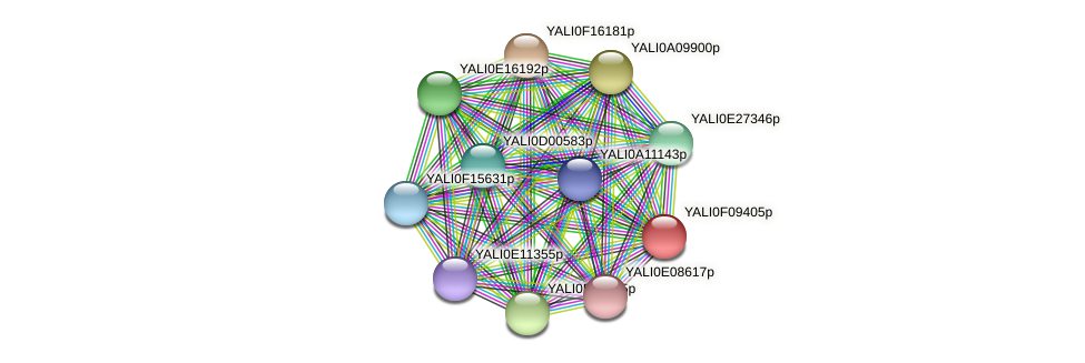 XP_505205.1 protein (Yarrowia lipolytica) - STRING interaction network