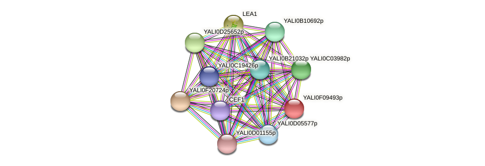XP_505210.1 protein (Yarrowia lipolytica) - STRING interaction network