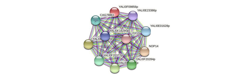 XP_505225.1 protein (Yarrowia lipolytica) - STRING interaction network