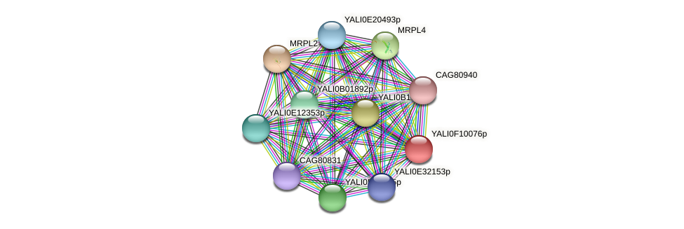 XP_505233.1 protein (Yarrowia lipolytica) - STRING interaction network