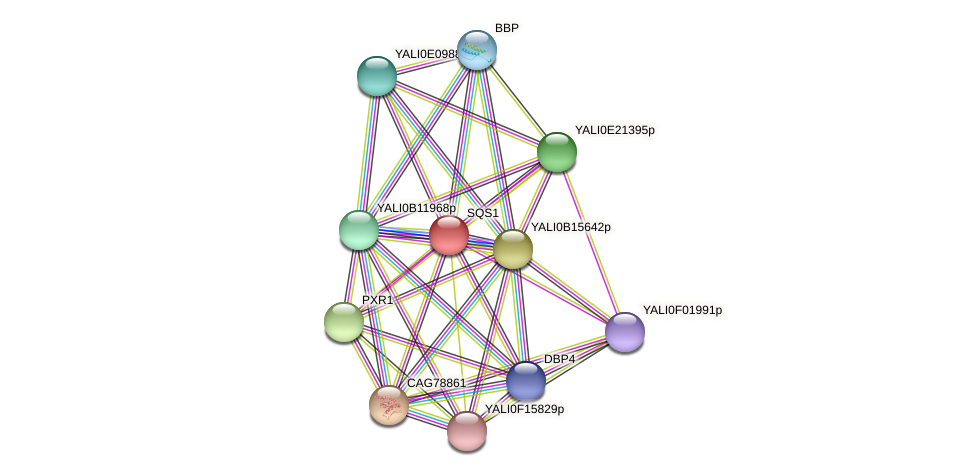 XP_505279.1 protein (Yarrowia lipolytica) - STRING interaction network