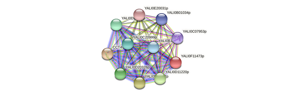 XP_505288.1 protein (Yarrowia lipolytica) - STRING interaction network