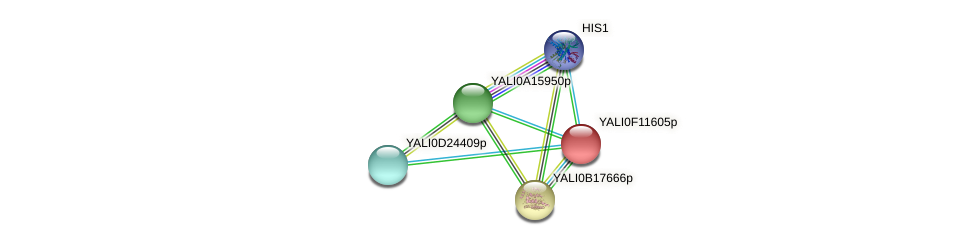XP_505294.1 protein (Yarrowia lipolytica) - STRING interaction network