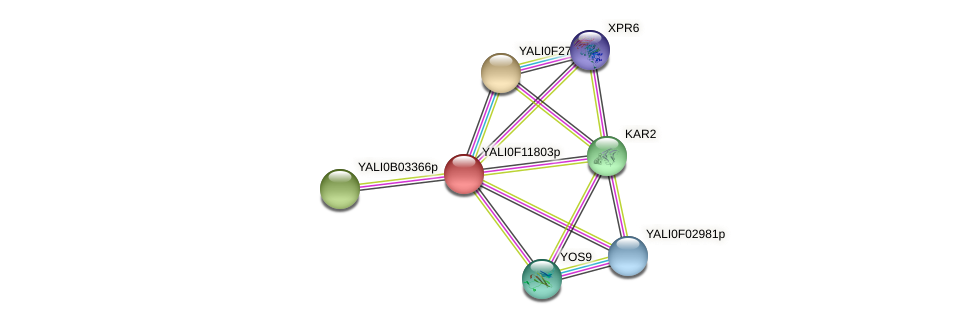 XP_505303.1 protein (Yarrowia lipolytica) - STRING interaction network