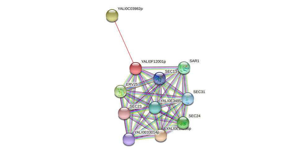 XP_505312.2 protein (Yarrowia lipolytica) - STRING interaction network
