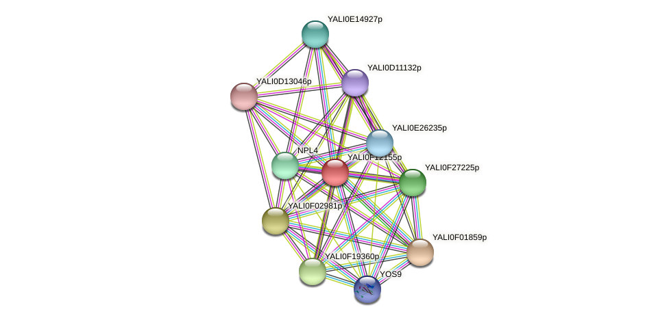 XP_505319.1 protein (Yarrowia lipolytica) - STRING interaction network