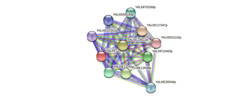 XP_505333.1 protein (Yarrowia lipolytica) - STRING interaction network