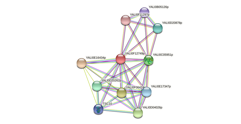 XP_505342.1 protein (Yarrowia lipolytica) - STRING interaction network