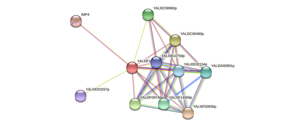 XP_505344.1 protein (Yarrowia lipolytica) - STRING interaction network