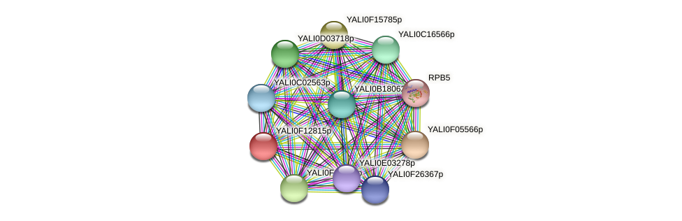 XP_505345.1 protein (Yarrowia lipolytica) - STRING interaction network