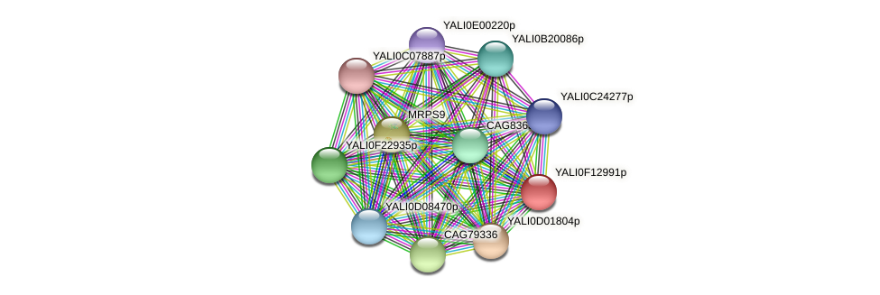 XP_505353.1 protein (Yarrowia lipolytica) - STRING interaction network