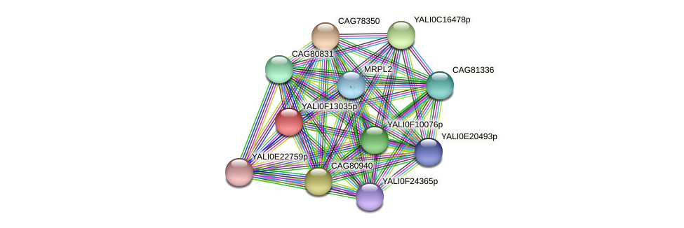XP_505355.1 protein (Yarrowia lipolytica) - STRING interaction network
