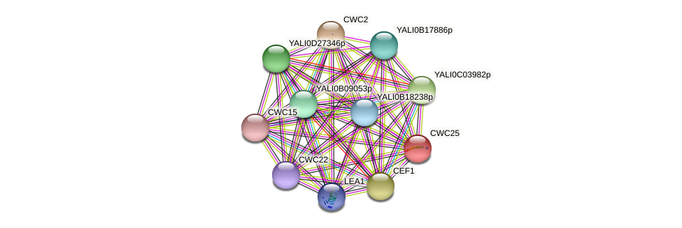 CWC25 protein (Yarrowia lipolytica) - STRING interaction network