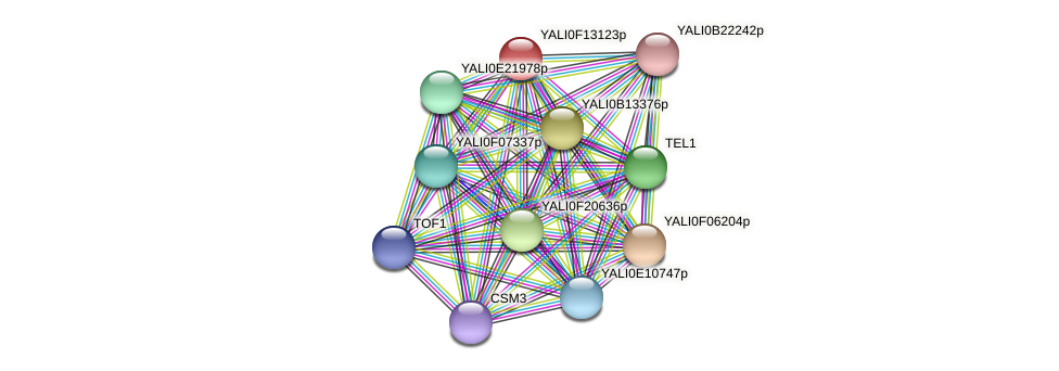 XP_505358.1 protein (Yarrowia lipolytica) - STRING interaction network