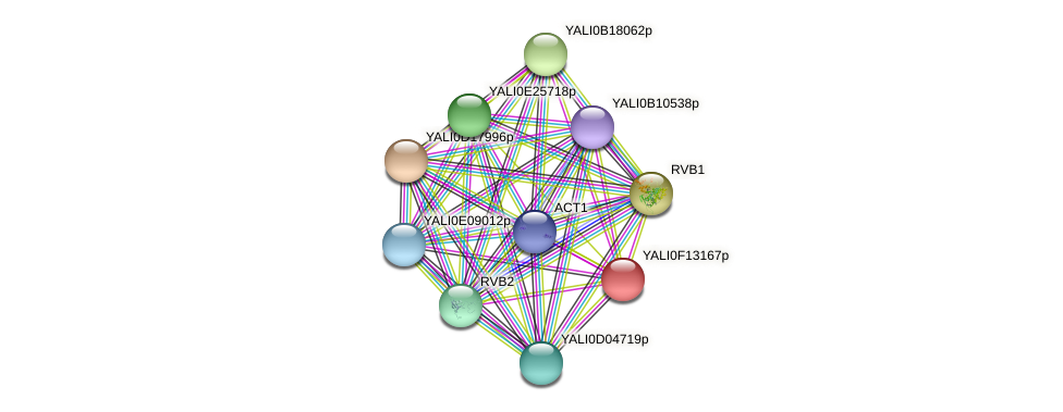 XP_505361.1 protein (Yarrowia lipolytica) - STRING interaction network