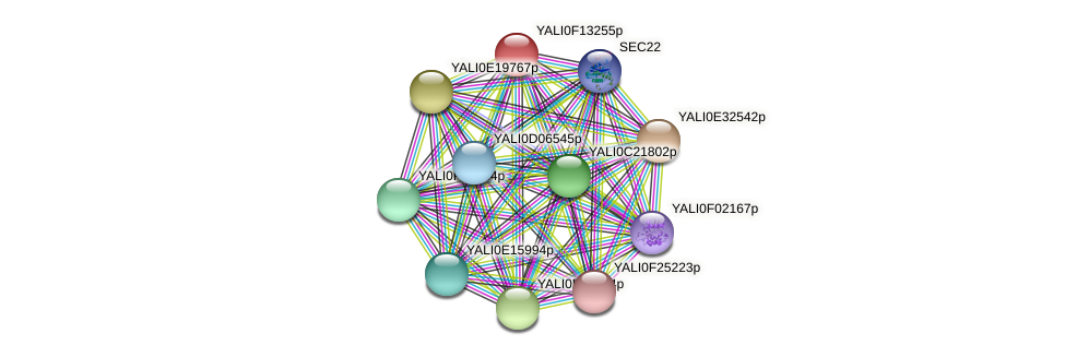 XP_505365.1 protein (Yarrowia lipolytica) - STRING interaction network