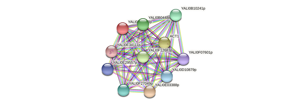XP_505369.1 protein (Yarrowia lipolytica) - STRING interaction network