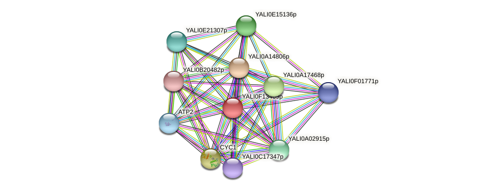 XP_505372.1 protein (Yarrowia lipolytica) - STRING interaction network
