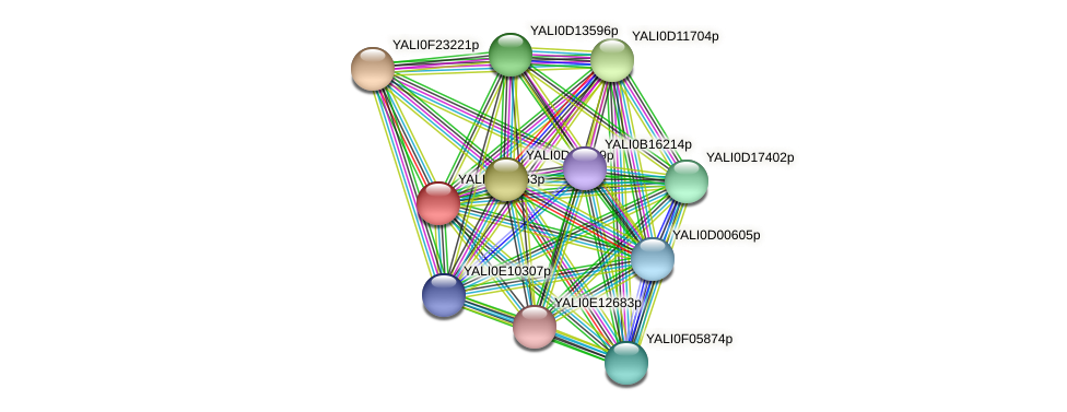 XP_505374.1 protein (Yarrowia lipolytica) - STRING interaction network