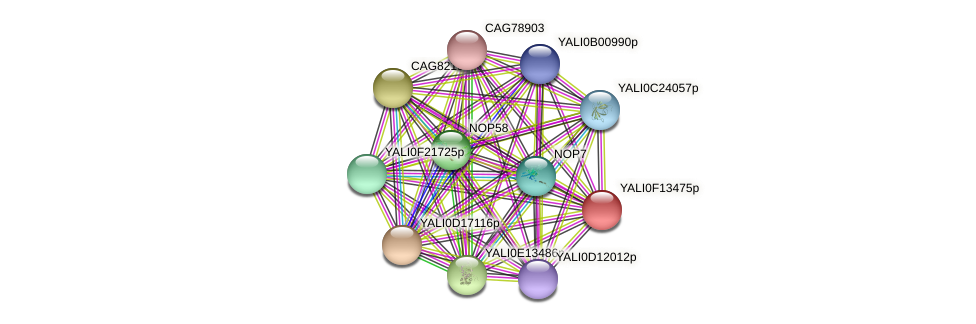 XP_505375.1 protein (Yarrowia lipolytica) - STRING interaction network