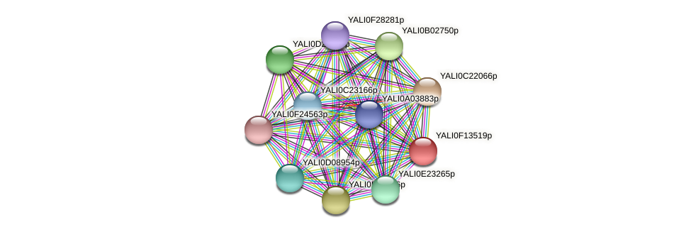 XP_505377.1 protein (Yarrowia lipolytica) - STRING interaction network