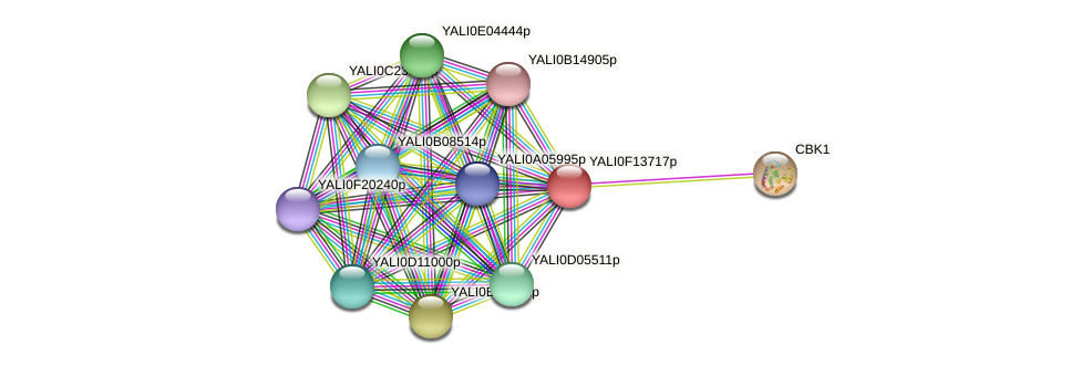 XP_505385.1 protein (Yarrowia lipolytica) - STRING interaction network
