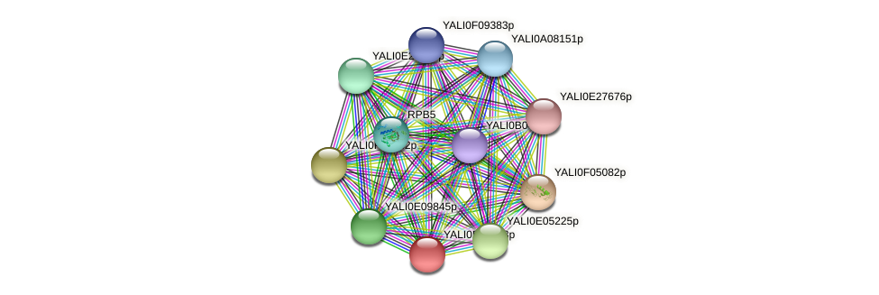 XP_505388.1 protein (Yarrowia lipolytica) - STRING interaction network