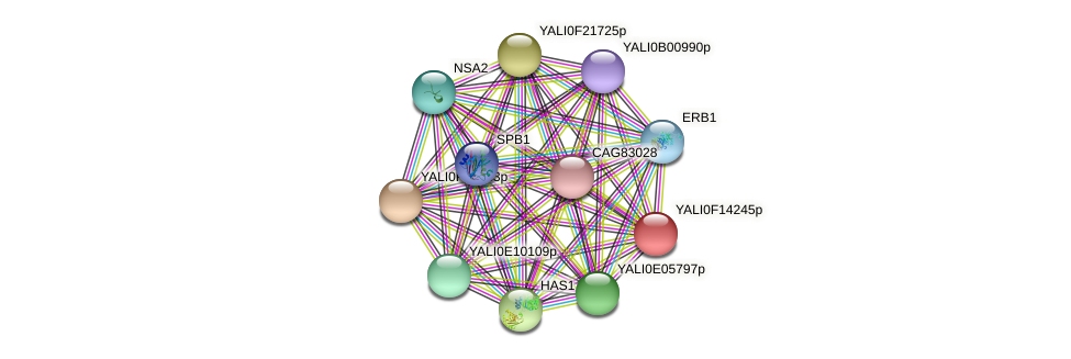 XP_505404.1 protein (Yarrowia lipolytica) - STRING interaction network