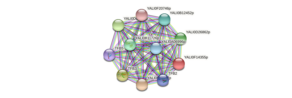 XP_505409.1 protein (Yarrowia lipolytica) - STRING interaction network