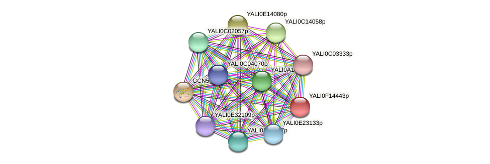 XP_505413.1 protein (Yarrowia lipolytica) - STRING interaction network