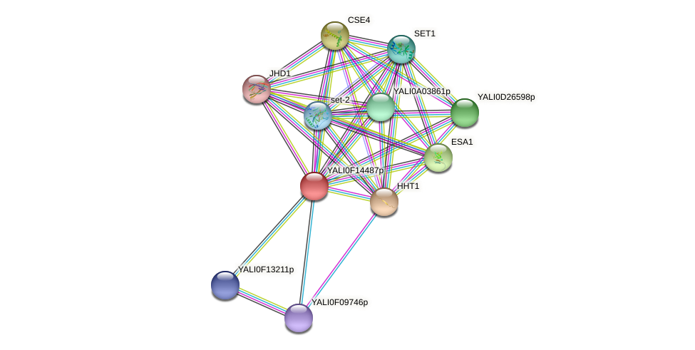 XP_505415.1 protein (Yarrowia lipolytica) - STRING interaction network