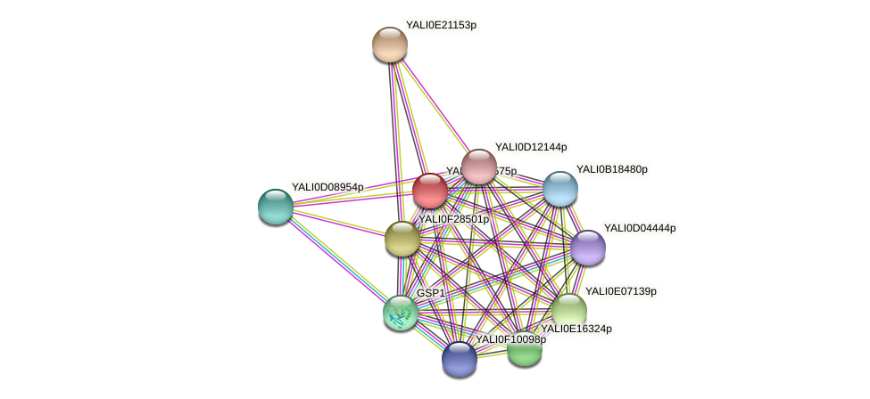 XP_505419.1 protein (Yarrowia lipolytica) - STRING interaction network