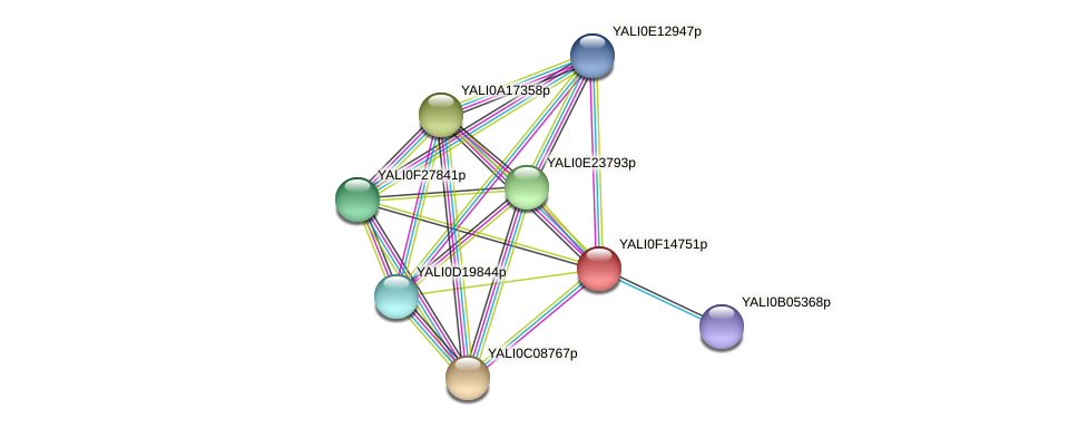 XP_505427.1 protein (Yarrowia lipolytica) - STRING interaction network