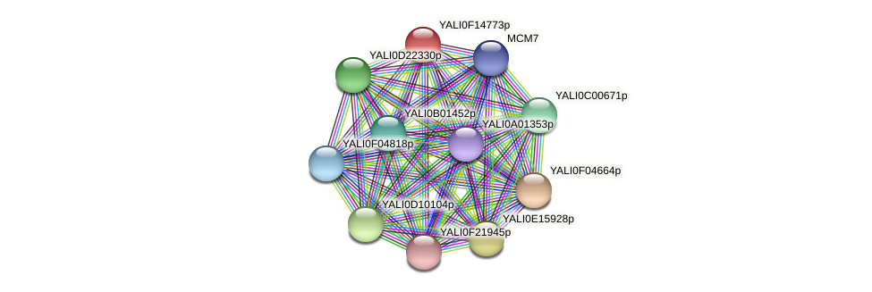 XP_505428.1 protein (Yarrowia lipolytica) - STRING interaction network