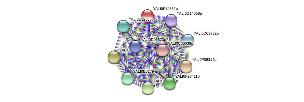 XP_505432.1 protein (Yarrowia lipolytica) - STRING interaction network
