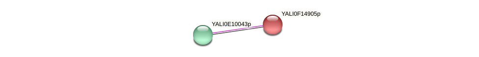 XP_505434.1 protein (Yarrowia lipolytica) - STRING interaction network
