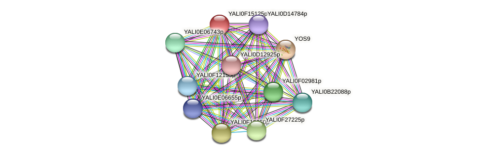 XP_505444.1 protein (Yarrowia lipolytica) - STRING interaction network