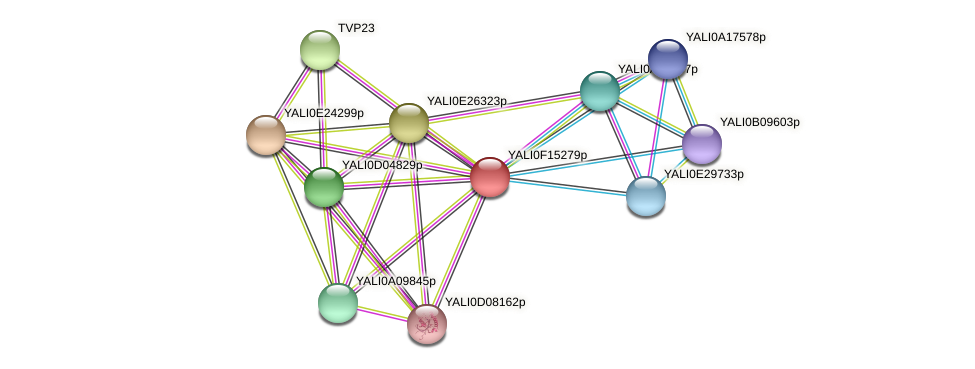 XP_505451.1 protein (Yarrowia lipolytica) - STRING interaction network