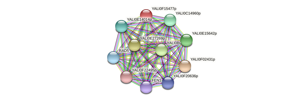 XP_505458.1 protein (Yarrowia lipolytica) - STRING interaction network