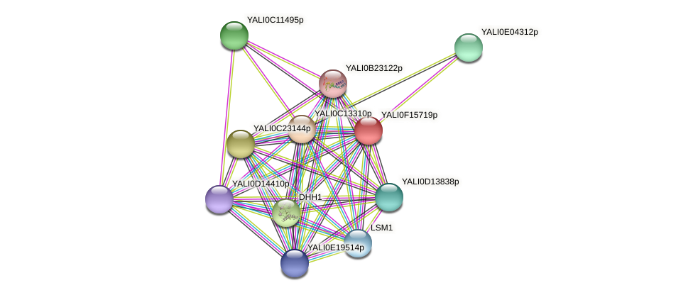 XP_505466.1 protein (Yarrowia lipolytica) - STRING interaction network