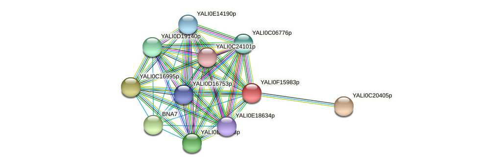 XP_505478.1 protein (Yarrowia lipolytica) - STRING interaction network