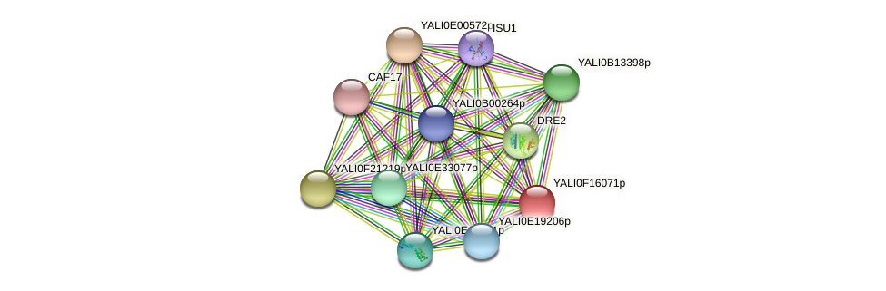XP_505482.1 protein (Yarrowia lipolytica) - STRING interaction network