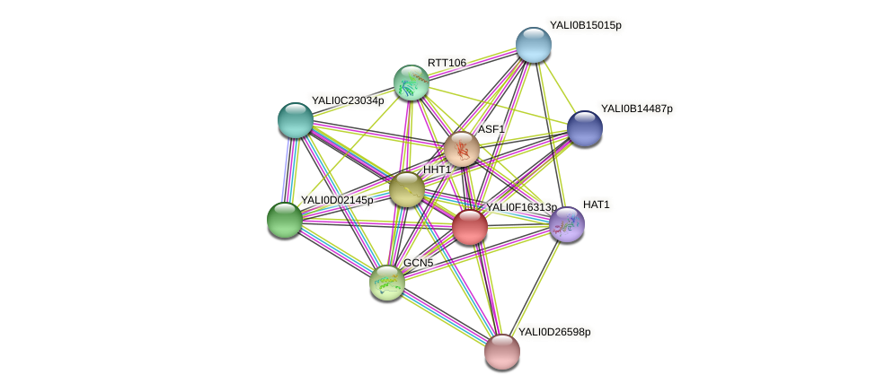 XP_505491.1 protein (Yarrowia lipolytica) - STRING interaction network
