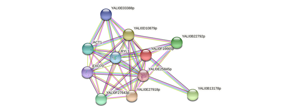 XP_505504.1 protein (Yarrowia lipolytica) - STRING interaction network