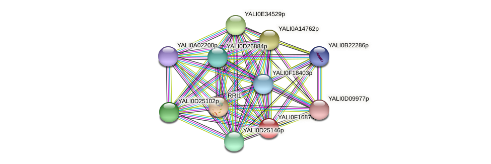 XP_505511.1 protein (Yarrowia lipolytica) - STRING interaction network