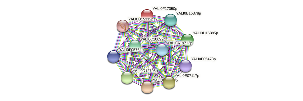 XP_505519.1 protein (Yarrowia lipolytica) - STRING interaction network
