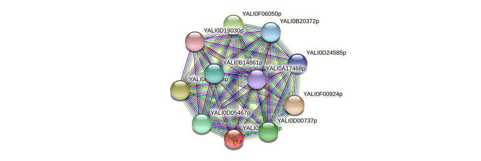 XP_505527.1 protein (Yarrowia lipolytica) - STRING interaction network