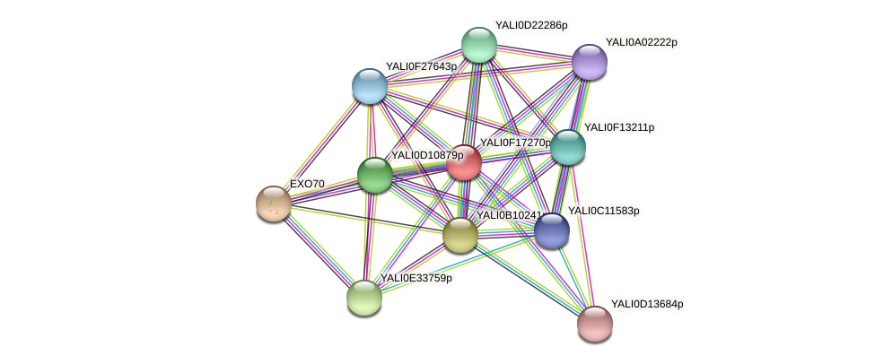XP_505528.1 protein (Yarrowia lipolytica) - STRING interaction network